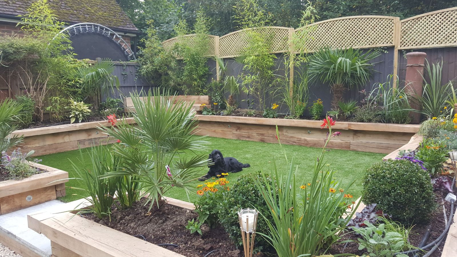 a dog loving his new garden with artificial grass